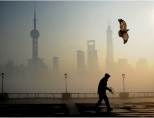 The Exotic and Historical Bamboo Hash #1837