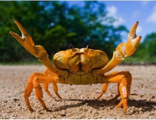 Make the Hash Smell Fishy Again #1838